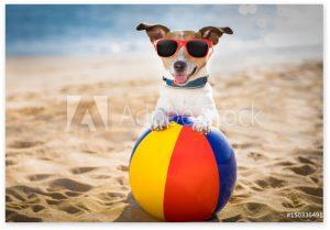 dog-placeholder