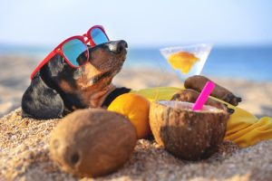 dog drinking cocktails at key west beach